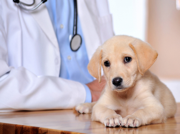Wauwatosa Pet Clinic Insurance
